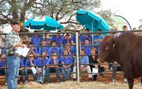 Breed promotional day attendees listening to bull discussion