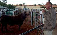 Arthur de Villiers Snr discussing one of the auction bulls.