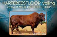 Hartebeestloop Auction 4 Bulls