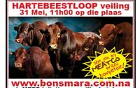 Hartebeestloop Auction Stall at Meatco Braai Competition