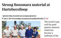 ECONOMIST: Strong Bonsmara Material AT hARTEBEESTLOOP