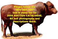 2009 Hartebeestloop Auction Catalogue